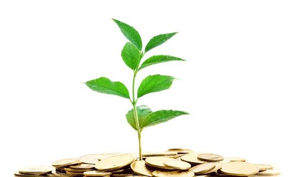 seed-enterprise-investment-scheme